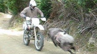 Angry ram vs rider - He