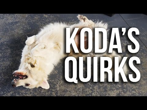 Life with a Great Pyrenees (Super Cooper Sunday #92)