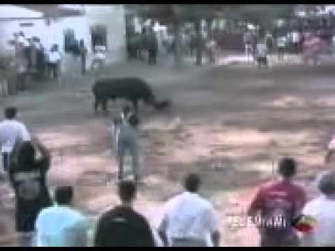 หมาใจเด็ด สู้กับ วัวกระทิง  madotube   YouTube