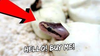 New Baby Snakes | Vlog #527