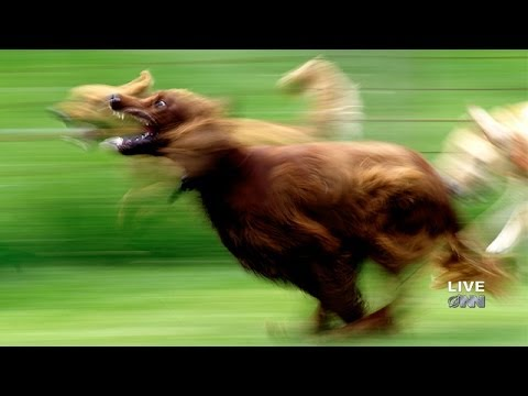 Breaking: Dogs Running video