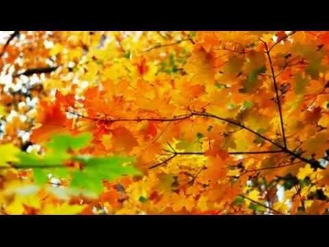 Падают  листья  -  Юрий  Шатунов
