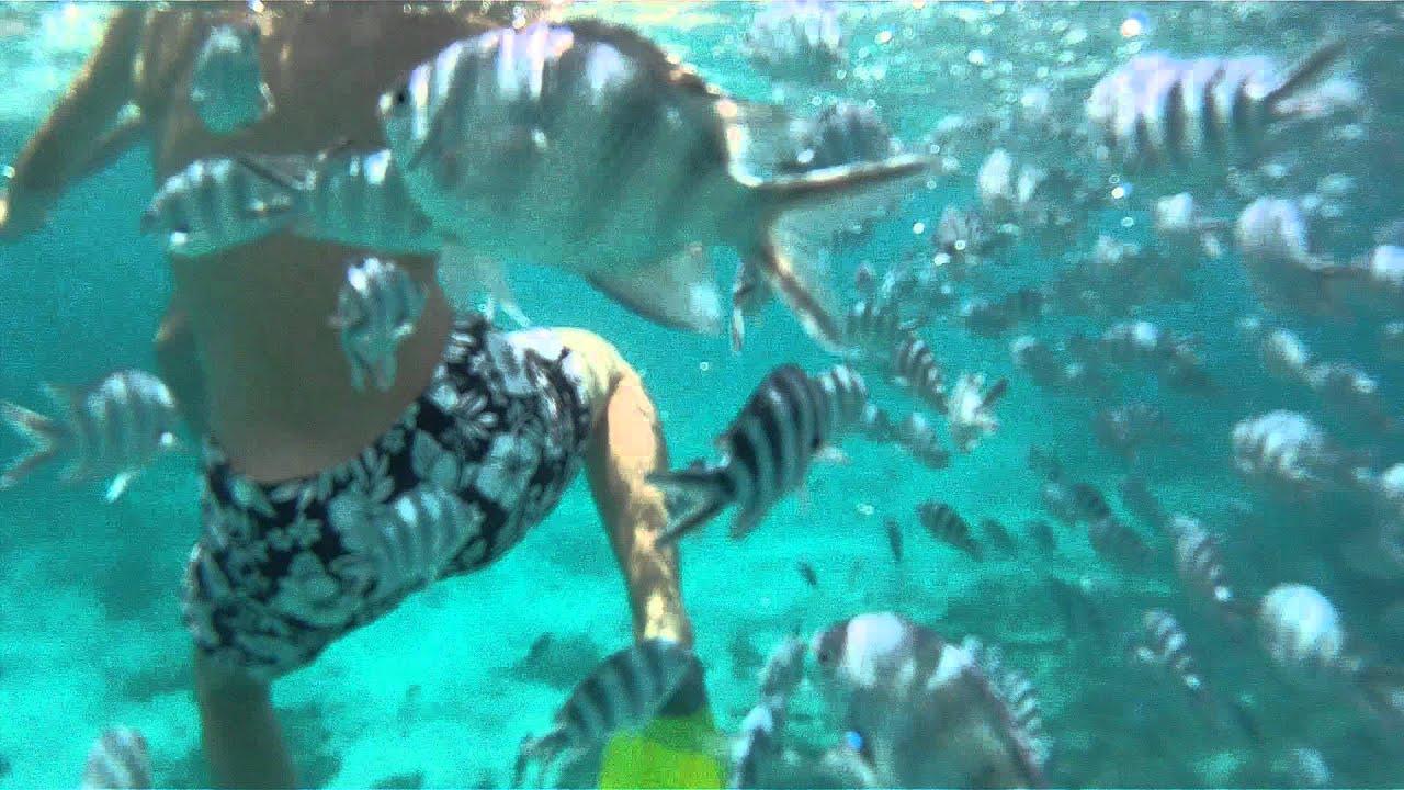 plong 233 e dans un aquarium au baystone boutique hotel and spa ile maurice