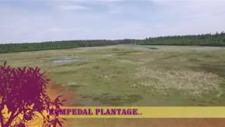 download lagu Kompedal Plantage. Set Fra Drone.. gratis