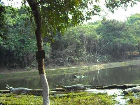 Nandankanan, Puri (Odisha)