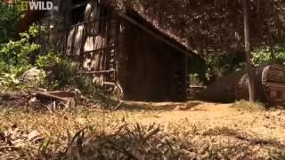 Video clip Sự thật về loài rắn độc nhất thế giới