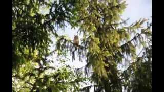 Sowa Uszatka w moim ogrodzie Będzin