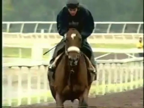 Barbaro, un caballo, un heroe, una leyenda.