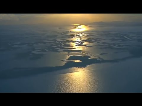 Summer on the Reef _Wild Animal Documentary # HD#4K