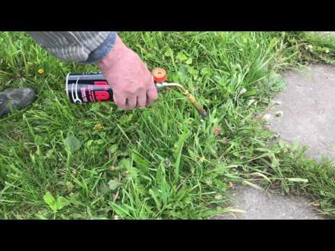 Как избавиться от одуванчиков в саду