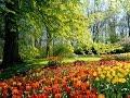 Bitki Yaşamının Biyolojisi ve Büyüme Süreci