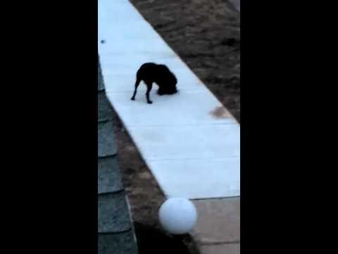 Worldstarhiphop Detroit Hood Fight Dog fluffing weave (MUST WATCH)