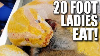 WHEN HUGE SNAKES EAT!!!! | BRIAN BARCZYK