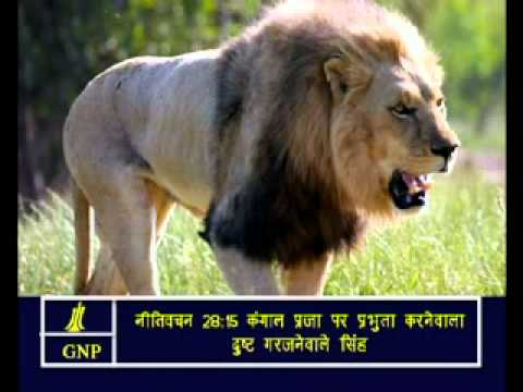 proverbs -28 Hindi Picture Bible