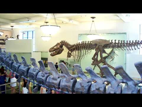 Night at the Museum 3 Part 1