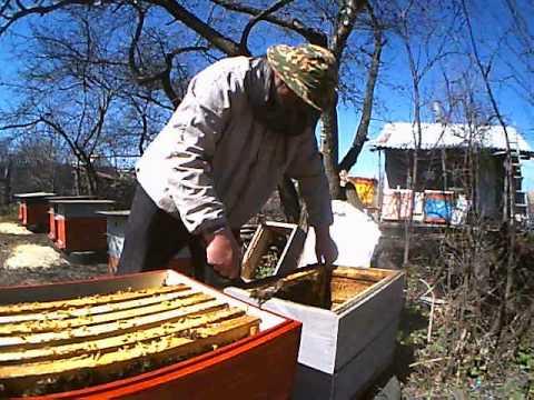 Как сажать пчел в новый улей 74