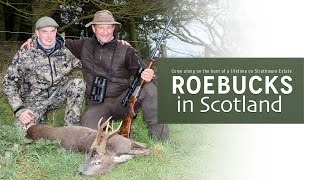 Roebucks in Scotland - Hunters Video