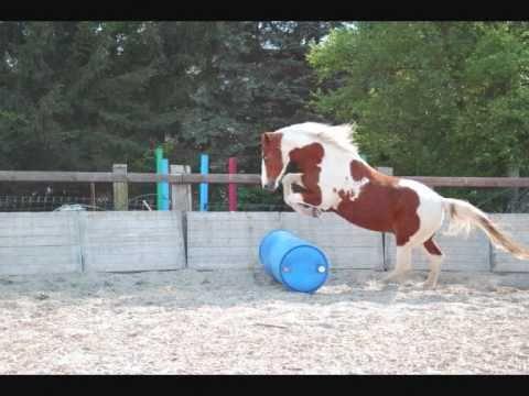 Das schönste Pferd – lovely Horse