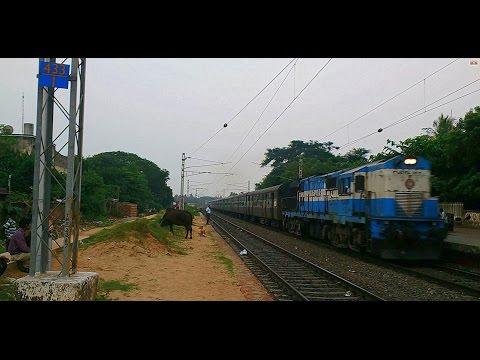 Man, Bull, Dog & Train - Screaming Raipur icecream chugs through with Puri Sambalpur Intercity