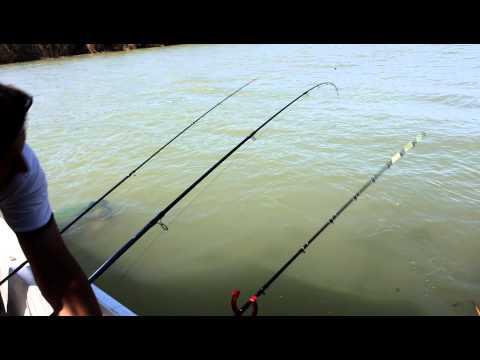 ловля сазана с лодки на водохранилище