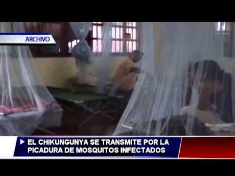 ¿Qué es la Chikungunya y cómo prevenirla?