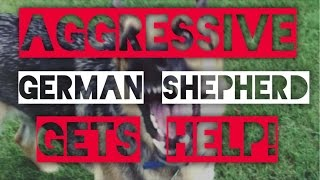 Aggressive German Shepherd-Dog training with America's Canine Educator-