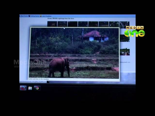 Illegal tiger tracking by private resort exposed