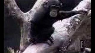 Mono se mete un dedo en el culo, lo huele y...