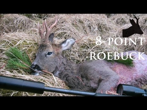 Hunting 8-point roebuck in Scotland: RoeStalker