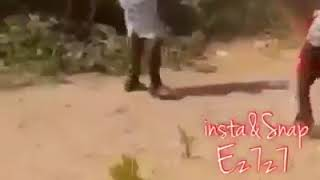 Funny Video | Funny Clip | Funny Animals video | Funny Babes Video