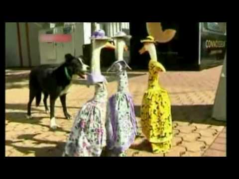 Ducks in Dresses (Easter - Australia)