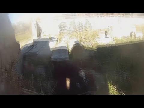 Gopro perro y águila cazando codorniz