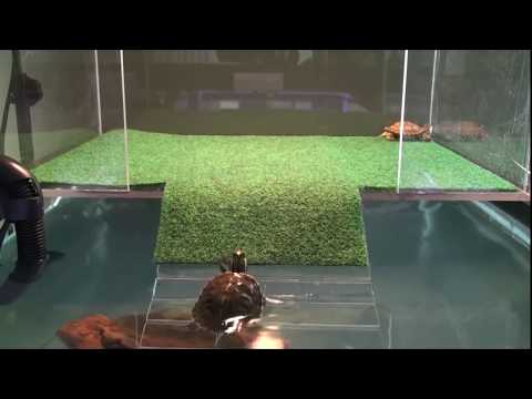 Homemade Turtle Topper/Basking Platform On Tank Part 3 | How To Make