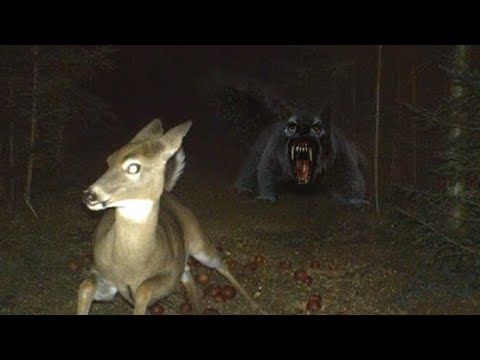VAMPIRE SQUIRREL THAT HUNTS DEER