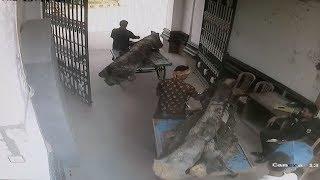 রাজপালঙ্কে ঘুমান কর্মচারী, প্রাচীন গাছ কেটে সাবাড় || Prothom Alo News