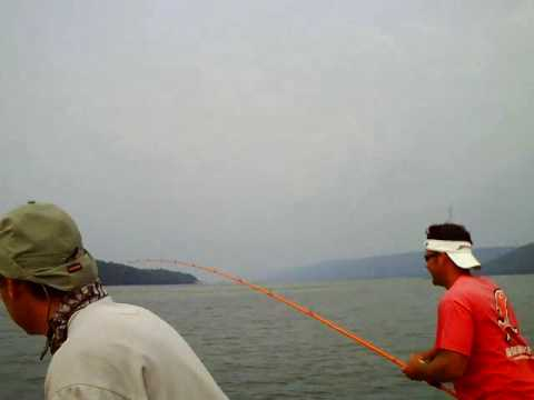 Lake Guntersville Bass Fishing with Gambler Lures