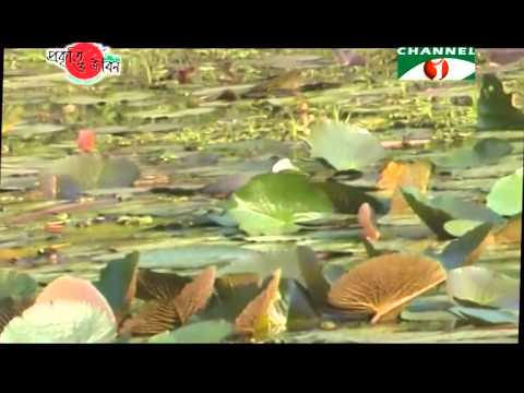 Nature and Life   Episode 150 (Plants of Haor)