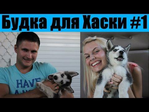 Будка для сибирской хаски / Dog house Husky 1-я часть