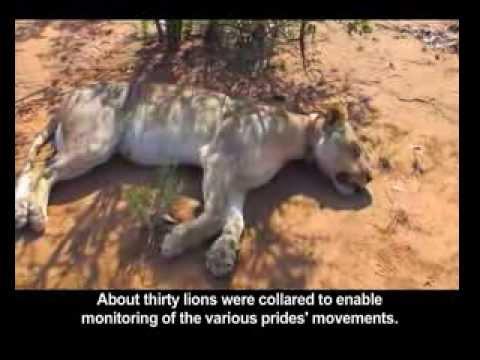 Vets in the Kruger National Park