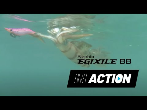 Sephia Egixile Squid Jigs In Action video