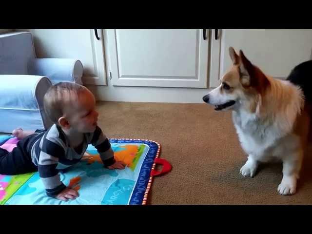 Baby Beau and Corgi Tucker's Brotherly Love