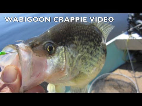 Lake Wabigoon Crappie fishing. May 26