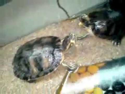 Acquarium tartarughiera etnico allestita youtube for Tartarughiera per tartarughe grandi