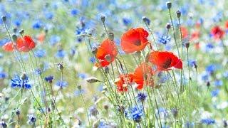 "Peaceful Music, Relaxing Music, Instrumental Music ""Hillside Meadow"" by Tim Janis"