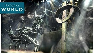 Crabs and Crucifixes - Dark Souls 3 Documentary