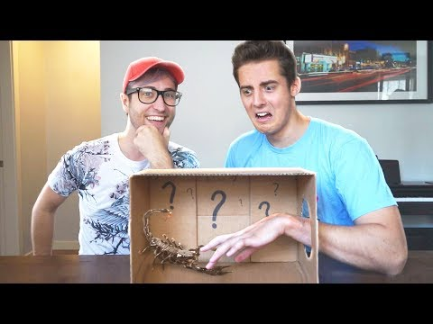 WHAT'S IN THE BOX? CHALLENGE