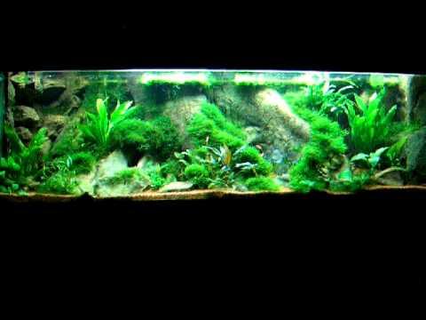 amazonas aquarium 720l mit co2 anlage ph contoller. Black Bedroom Furniture Sets. Home Design Ideas