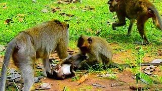 Little DEE DEE Often Disturb Baby Lori and Make Lori Angry With Him| Baby Lori Run So Fast