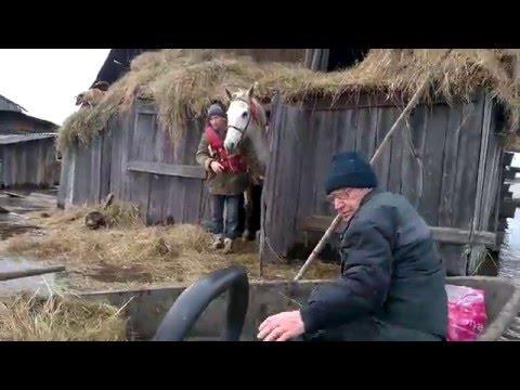 Операция по спасению кобылы из затопленной конюшни /serovglobus.ru