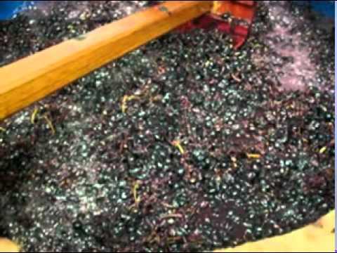 Elaboracion de Vino Casero Elaboracion de un Vino Casero